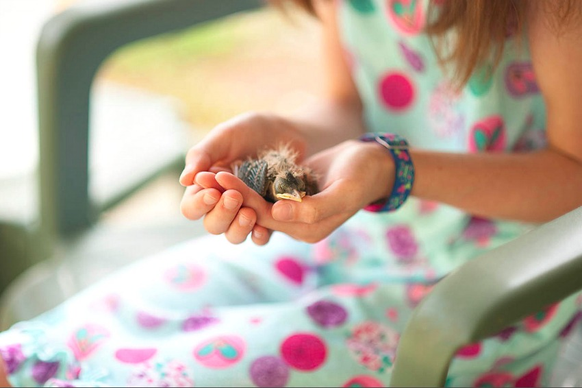 baby robin nature study