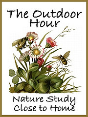 Outdoor Hour Nature Study