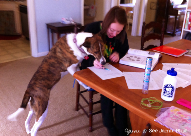 LacyDog helps with schoolwork