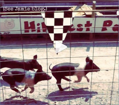 click to watch pig racing clip