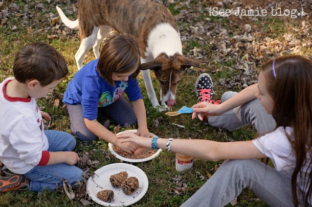 Dog helps with pinecones