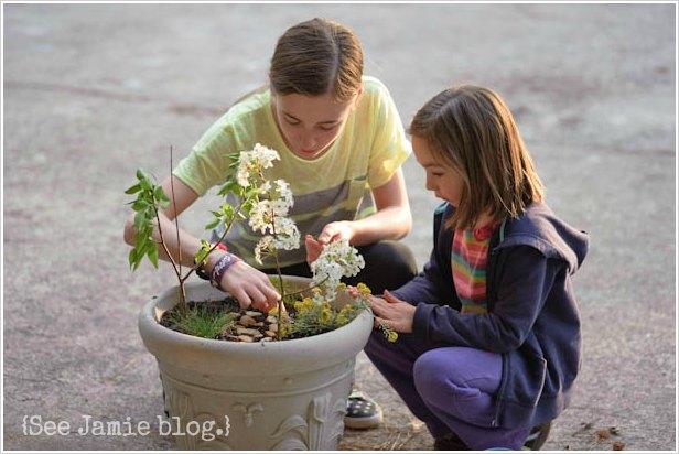 assembling a fairy garden
