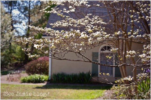 cottage garden - See Jamie blog
