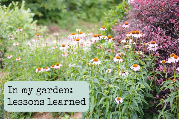 lessons learned in my garden