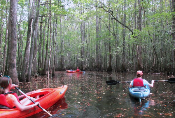 kayak blackwater river