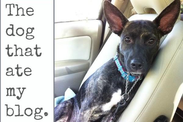 dog ate my blog