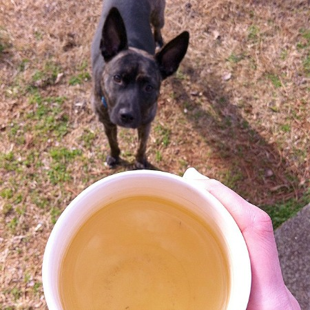 tea and dog