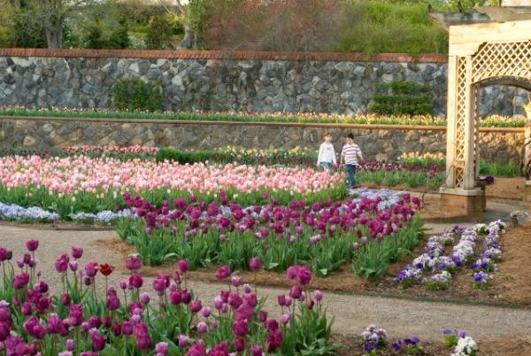 Flower Garden tulips