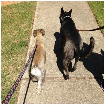 dog buddies