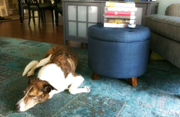 sleeping dog and library books
