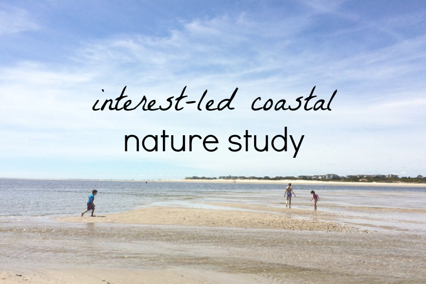 Interest-led nature study on the coast