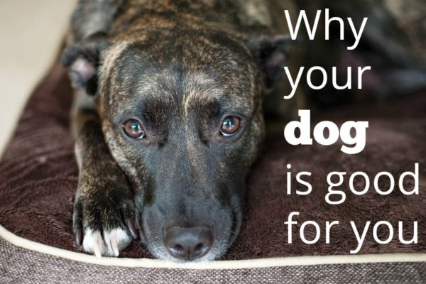 why your dog is good for you
