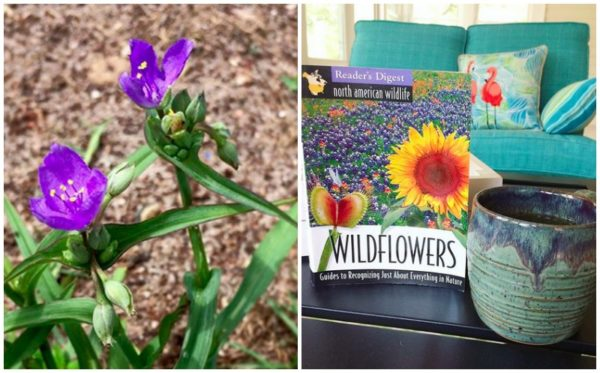 wildflower nature guide book