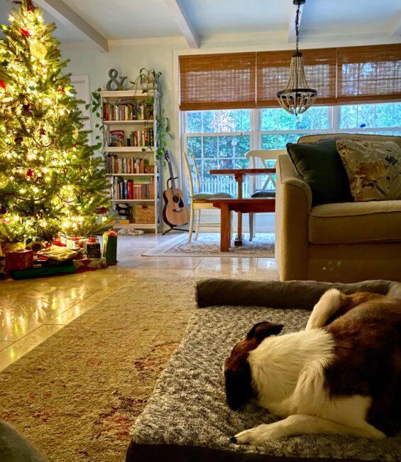 Daisy the dog enjoys a big soft bed near the Christmas tree.